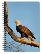 Roosting Tree 2 Spiral Notebook