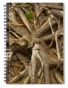 Root System Spiral Notebook