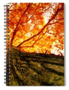 Roots To Branches IIi Spiral Notebook