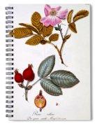 Rosa Villosa Spiral Notebook