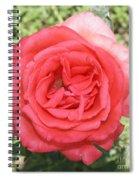 Rose At Clark Gardens Spiral Notebook