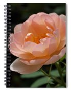 Rose Blush Spiral Notebook