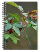 Rose Bush Rain Spiral Notebook