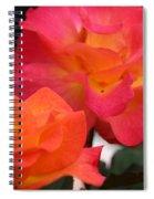Rose Glow Spiral Notebook
