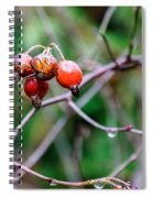 Rose Hip Wet Spiral Notebook