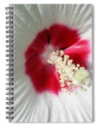 Rose Mallow - Honeymoon White With Eye 01 Spiral Notebook