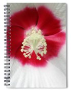 Rose Mallow - Honeymoon White With Eye 03 Spiral Notebook