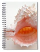 Rose Murex Seashell Spiral Notebook