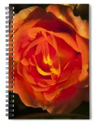 Rose Orange Spiral Notebook