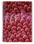 Rose Petal Surface Sem Spiral Notebook