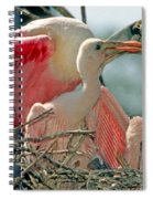 Roseate Spoonbill Feeding Young At Nest Spiral Notebook