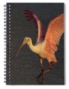 Roseate Spoonbill Photograph Spiral Notebook
