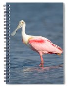 Roseate Spoonbill Platalea Ajaja Spiral Notebook