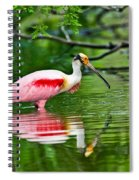 Roseate Spoonbill Wading Spiral Notebook