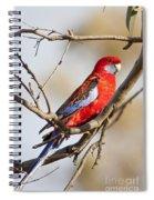 Crimson Rosella 1 - Australia Spiral Notebook