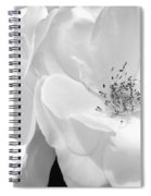 Roses Soft Petals In Black And White Spiral Notebook