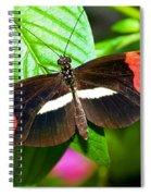 Rosina Butterfly Spiral Notebook