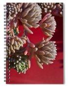 Rosy Sedum 5 Spiral Notebook