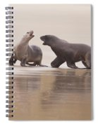 Rough Courtship Of Male And Female Hookers Sealions Spiral Notebook