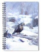 Rough Legged Hawk On Deer Carcass Spiral Notebook