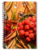 Rowan Berry Spiral Notebook