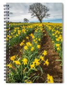 Rows Of Daffodils Spiral Notebook