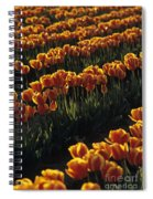 Rows Of Orange Tulips In Field Mount Vernon Washington State Usa Spiral Notebook