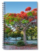Royal Poinciana Spiral Notebook