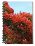 Royal Poinciana Branch Spiral Notebook