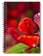 Royal Poinciana - Flamboyant - Delonix Regia Spiral Notebook