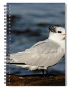 Royal Tern Spiral Notebook