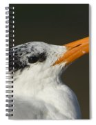 Royal Tern Spiral Notebook