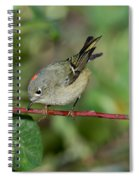 Ruby-crowned Kinglet Showing Crown Spiral Notebook