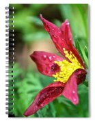 Ruby Riches Spiral Notebook