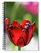 Ruby Scallops Spiral Notebook
