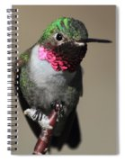 Ruby-throated Hummer Spiral Notebook