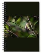 Ruby-throated Hummingbird 3 Spiral Notebook