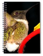 Ruby-throated Hummingbird Landing On Feeder Spiral Notebook