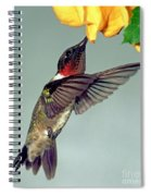Ruby-throated Hummingbird Male At Flower Spiral Notebook