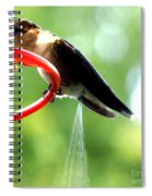 Ruby-throated Hummingbird Pooping Spiral Notebook