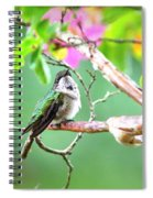 Ruby-throated Hummingbnird - 6763-002 Spiral Notebook