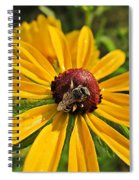 Rudbeckia Bee Spiral Notebook