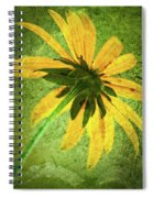 Rudbeckia On Cement Spiral Notebook