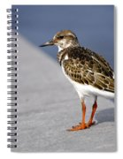 Ruddy Turnstone Bird Arenaria Interpres Florida Usa Spiral Notebook