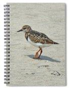Ruddy Turnstone Wading Bird - Arenaria Interpres Spiral Notebook
