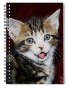 Rude Kitten Spiral Notebook