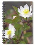 Rue Anemone Wildflower - Pale Pink - Thalictrum Thalictroides Spiral Notebook