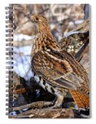 Ruffed Grouse On Alert Spiral Notebook