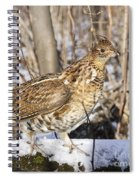 Ruffed Grouse On Snowy Log Spiral Notebook