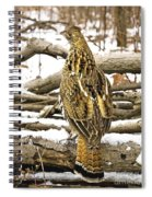 Ruffed Grouse Rear View Spiral Notebook